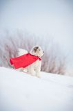 Funny curly super dog Stock Photography