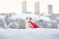 Funny curly super dog looks at the city Stock Photo