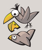 Funny cute Birds Royalty Free Stock Photo