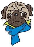 Funny cute cartoon pug in scarf Royalty Free Stock Photo