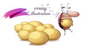 Funny, cute, crazy colorado beetle. Potato illustration. Funny, cute, crazy colorado beetle. Potato illustration Vector eps 10 Royalty Free Stock Images
