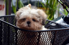 Funny cute dog Royalty Free Stock Photo