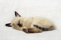 Cute kitten sleeping Stock Image