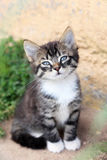 Funny cute kitten sniffs Royalty Free Stock Image