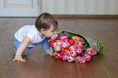 Funny cute little baby smell flowers - bouquet of tulips royalty free stock images