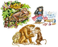 Funny Cute Monkeys