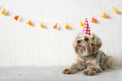 Funny cute Yorkshire Terrier (Yorkie) Dog in red party hat cap l. Ies on table on background of festive garland and decor. Party, fun, holiday background, banner royalty free stock images