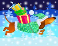 Funny dachshund in winter clothes with gifts on the background of Christmas trees. And snowflakes Stock Images