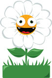 Funny daisy in a garden Royalty Free Stock Image