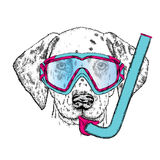 Funny Dalmatian in a mask for diving. Stock Photo