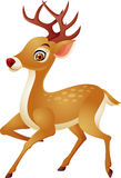 Funny Deer cartoon Royalty Free Stock Image