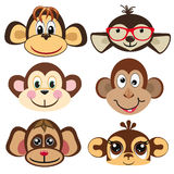 Funny differently monkey. Face of monkeys. Stock Photography