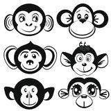 Funny differently monkey. Face of monkeys. Royalty Free Stock Images