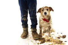 FUNNY DIRTY DOG AND CHILD. JACK RUSSELL DOG AND BOY WEARING BOOTS AFTER PLAY IN A MUD PUDDLE WITH ASHAMED EXPRESSION. ISOLATED. STUDIO SHOT AGAINST WHITE stock image