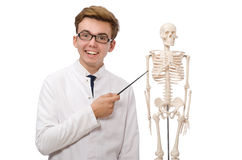 The funny doctor with skeleton isolated on white Royalty Free Stock Images