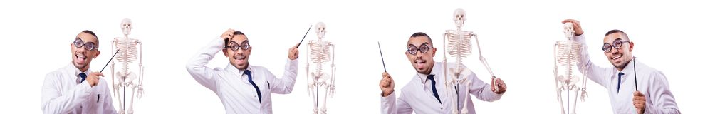The funny doctor with skeleton isolated on white. Funny doctor with skeleton isolated on white royalty free stock image