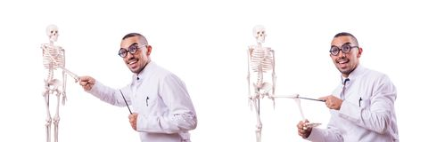The funny doctor with skeleton isolated on white. Funny doctor with skeleton isolated on white royalty free stock photography