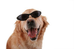 Funny dog. Isolated on white background stock image