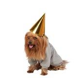 Funny dog Stock Photography