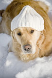 Funny dog. With white knitted hat Royalty Free Stock Photos