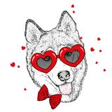 Funny dog in accessories with hearts. Vector illustration for a postcard or a poster, print for clothes. Valentine`s Day. Funny dog in accessories with hearts Royalty Free Stock Image