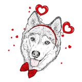 Funny dog in accessories with hearts. Vector illustration for a postcard or a poster, print for clothes. Valentine`s Day. Funny dog in accessories with hearts Royalty Free Stock Photos