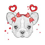 Funny dog in accessories with hearts. Vector illustration for a postcard or a poster, print for clothes. Valentine`s Day. Funny dog in accessories with hearts Stock Photo