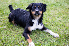 Funny dog animal outside park Stock Image