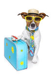 Funny dog as a tourist