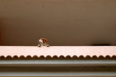 Funny dog on a balcony Royalty Free Stock Photography