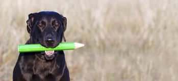 Funny dog banner Royalty Free Stock Photos