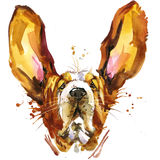 Funny dog basset fashion T-shirt graphics. dog illustration with splash watercolor textured background.