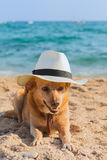 Funny dog at the beach Royalty Free Stock Images