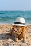 Funny dog at the beach Royalty Free Stock Photos