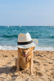 Funny dog at the beach Royalty Free Stock Photography