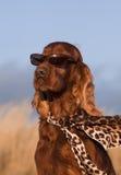 Funny dog Royalty Free Stock Image