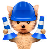 Funny dog in blue hard hat Isolated on white. Funny dog in blue hard hat with cone isolated on white background. Concepts for web banners, web sites. Fixing Stock Photography