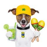 Funny dog brazil Stock Image