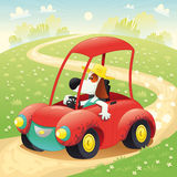 Funny dog on a car royalty free stock photo