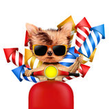 Funny dog carry firework rockets. Isolated on white background. Birthday and party concept. Realistic 3D illustration Stock Photos