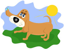 Funny dog Stock Images