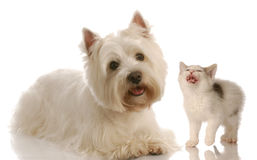 Funny dog and cat fight Royalty Free Stock Images