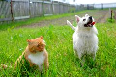 Funny dog and cat sad. Background, pet together group stock photos
