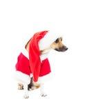 Funny dog Stock Image