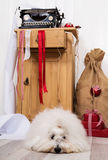 Funny dog at christmas. Purebred Coton de Tulear with wrapping p Royalty Free Stock Photos