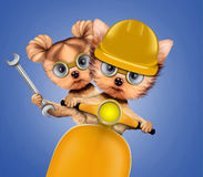 Funny dog with construction tools and scooter. Funny couple of puppies with hard hat, protective goggles, wrench and scooter, isolated on white. Teamwork and Stock Images