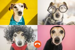 funny dog copy online group chat conference.