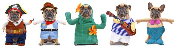 Funny dog costume variations with French Bulldog dressed up as pirate, cowboy, cactus, musician and mermaid on white background