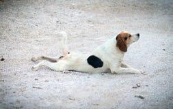 Funny dog. Royalty Free Stock Image