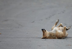 Funny dog dirty dog  on the road Royalty Free Stock Photography